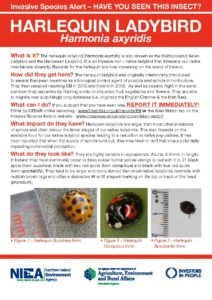Click to read full document on Harlequin ladybird